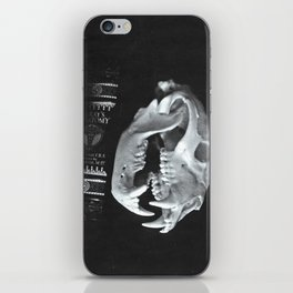 Bear Skull Still Life iPhone Skin