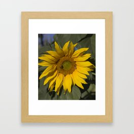 Lively Sunflower Framed Art Print