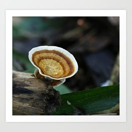 Fungi on tree stump Art Print