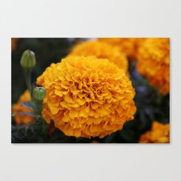 Flor de Cempasuchil Canvas Print
