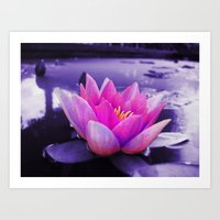Water Lily Blues Art Print
