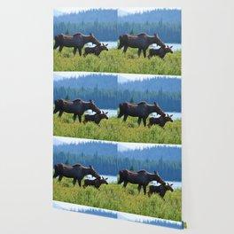 Mother moose & calf at Maligne Lake in Jasper National Park Wallpaper