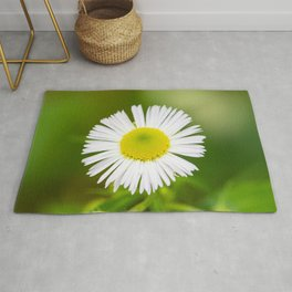 Bellis perennis is a common daisy Rug