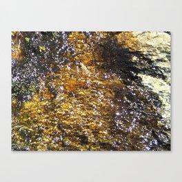 Water On Dark Stone Canvas Print