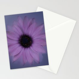 Shabby-chic African Daisy Flower Stationery Cards