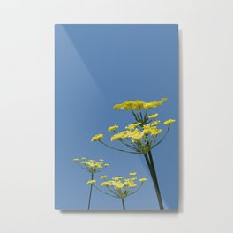 Fennel flowers Metal Print