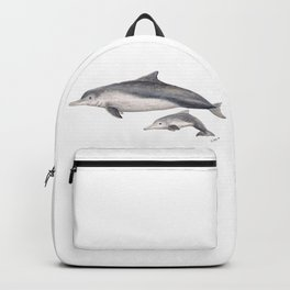 Australian humpback dolphin (Sousa sahulensis) with baby Backpack
