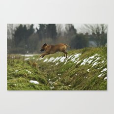 Super Dog Canvas Print