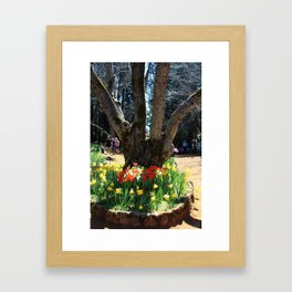 4 Trunks and Daffodils Framed Art Print