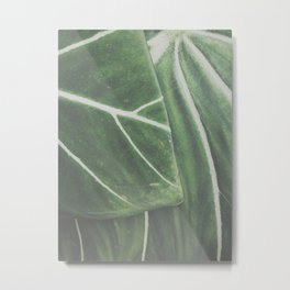overlapping leaves Metal Print