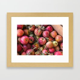 Pile of freshly picked organic farm apples with imperfections Framed Art Print