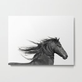 Wild - Horse Photography in Black and White Metal Print