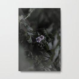 Potato flower Metal Print