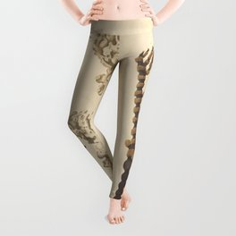 Naturalist Coral Leggings