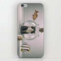 Curiosity killed the cat iPhone & iPod Skin