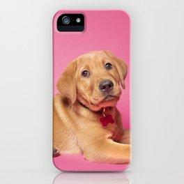 Red Fox Labrador Puppy on Pink iPhone Case