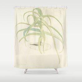 Herman Saftleven - Aloë perfoliata - 1619 - 1685 Shower Curtain