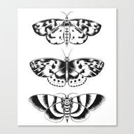 Moth Tryptic Canvas Print