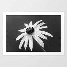 Rudbeckia Fulgida Black And White Art Print
