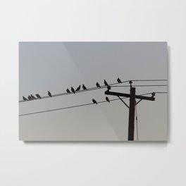 Pigeon Meeting Metal Print