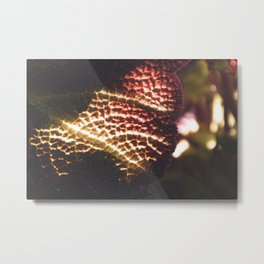 Illuminated Fiery Macro Plant Leaf - Nature Photography Metal Print