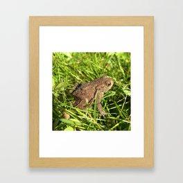 tree frog macro IV Framed Art Print