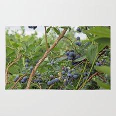 summer fruitful blueberry bushes. blueberry farm photography.  Rug