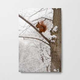 Squirrel sitting on twig in snow Metal Print
