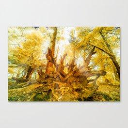 Dried Oak Canvas Print