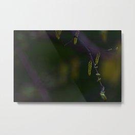 Concept nature : Hazel alder Metal Print