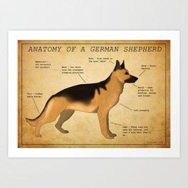 Anatomy of a German Shepherd Art Print