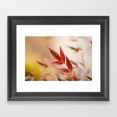 Winter Red Framed Art Print