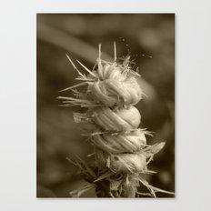 gnarled twig Canvas Print