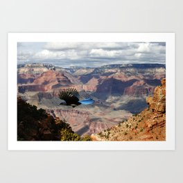 Scrub Jay over the Canyon Art Print
