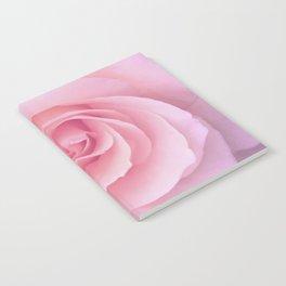 Flower   Pink Rose    Photography   Nature   Spring   Summer Notebook