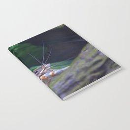 The crayfish Notebook