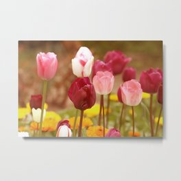 Blossoming pink tulips, romantic spring garden flowers, vivid colors Metal Print