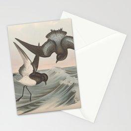 Grey-backed Storm Petrel, thalassidroma nereis3 Stationery Cards