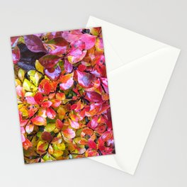 Barberry Fall Colors Stationery Cards