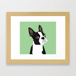Boston Terrier Portrait - Green Framed Art Print
