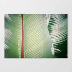 Sage + Red Canvas Print