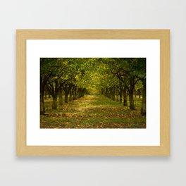 Hazelnuts in Oregon Framed Art Print