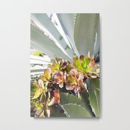 Succulent Layers Metal Print