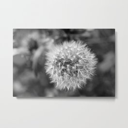 Grayscale Dandelion Flower - Original Botanical Nature Photography - Flora Art  Metal Print