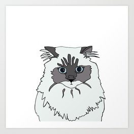 Theodore the Himalayan cat Art Print