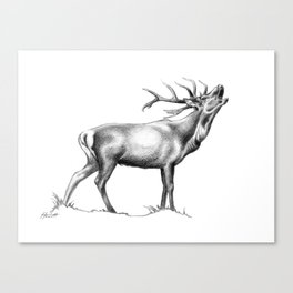 Red Stag Roaring 2 Canvas Print