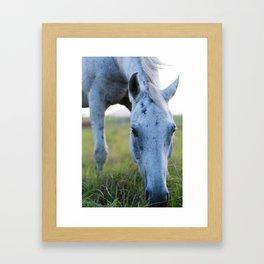 Bluey I Framed Art Print