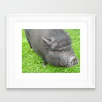 pigs Framed Art Prints featuring Pigs by jls364