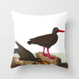 White-legged Oyster-catcher, or Slender-billed Oyster-catcher Bird Throw Pillow
