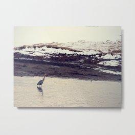 Heron Blue: The Great Metal Print